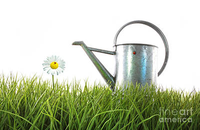 Old Watering Can In Grass With White Art Print by Sandra Cunningham