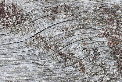 Lichen Photograph - Old Weathered Wood Abstract by Elena Elisseeva