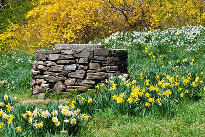 Photograph - Old Well And Daffodils by David Freuthal