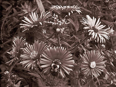 Photograph - Old Western Pollinating by Aimee L Maher Photography and Art Visit ALMGallerydotcom