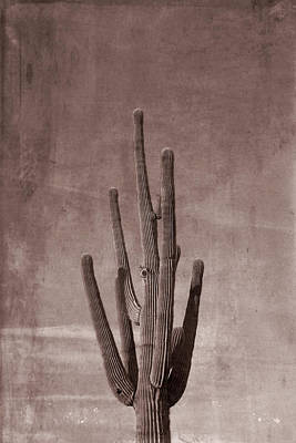 Photograph - Old Western Saguaro Cactus by Aimee L Maher Photography and Art Visit ALMGallerydotcom