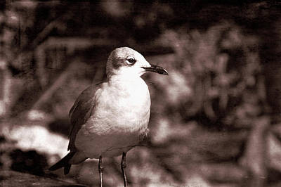 Photograph - Old Western Seagull by Aimee L Maher Photography and Art Visit ALMGallerydotcom