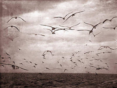 Photograph - Old Western Seagull Flight by Aimee L Maher ALM GALLERY