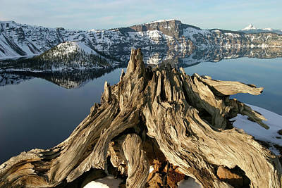 Photograph - Old Whitebark Pine At Crater Lake National Park, Oregon by Robert Mutch