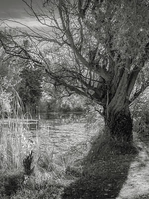 Photograph - Old Willow by Mark Mille
