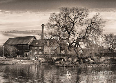 Stratford Photograph - Old Willow by Nick Eagles