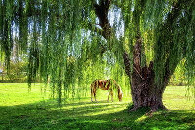 Photograph - Old Willow Tree In The Meadow by Carolyn Derstine