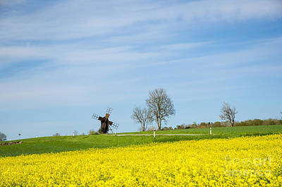 Photograph - Old Windmill At A Blossom Rapeseed Field by Kennerth and Birgitta Kullman
