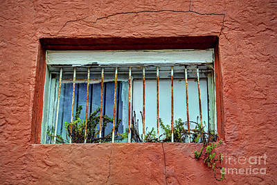 Photograph - Old Window by Savannah Gibbs