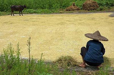 Old Woman Checking Harvested Rice Drying Art Print by Sami Sarkis