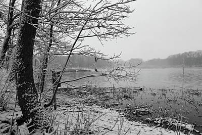 Photograph - Old Woman Creek 2018 - Crystalline Tree by Shawna Rowe