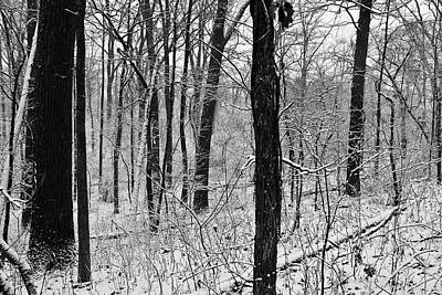 Photograph - Old Woman Creek 2018 - Snow Covered Trees by Shawna Rowe