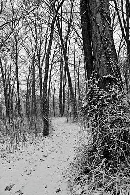Photograph - Old Woman Creek 2018 - Winter Trail by Shawna Rowe