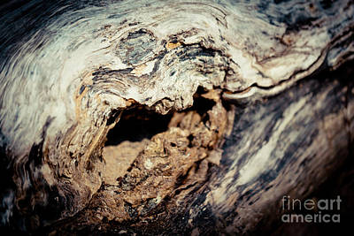 Wood Plank Flooring Photograph - Old Wood Abstract Vintage Texture Artmif by Raimond Klavins