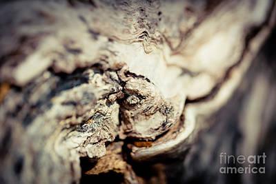 Old Wood Abstract Vintage Texture Fotografika.lv Art Print