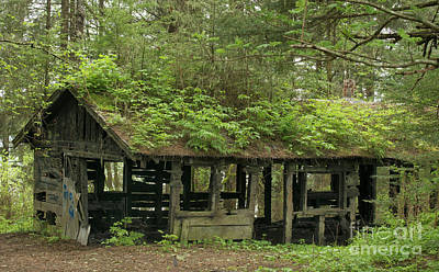 Photograph - Old Wood House Covered In Leaves by Loriannah Hespe