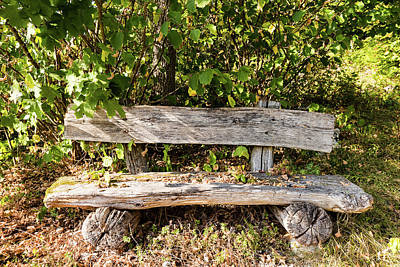 Photograph - Old Wooden Bench In Forest by Frank Gaertner