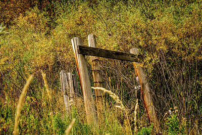 Old Wooden Fence Posts Art Print