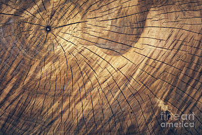 Photograph - Old Wooden Log Pattern, Natural Tree Texture. by Michal Bednarek