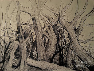 Painting - Old Woods by Maja Sokolowska