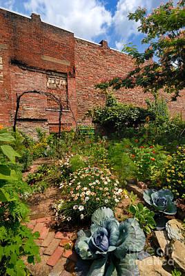Grape Vine Photograph - Olde Allegheny Community Gardens Pittsburgh Pennsvylvania by Amy Cicconi
