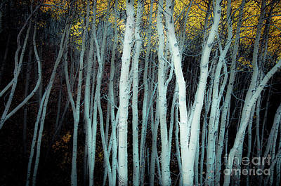 Photograph - Olde Worlde Aspens by The Forests Edge Photography - Diane Sandoval