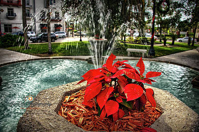 Photograph - Oldest City Poinsettia by Joedes Photography