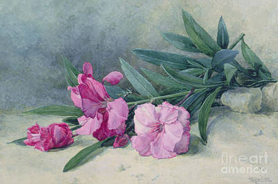 Oleanders Painting - Oleander Blossom by Mary E Butler
