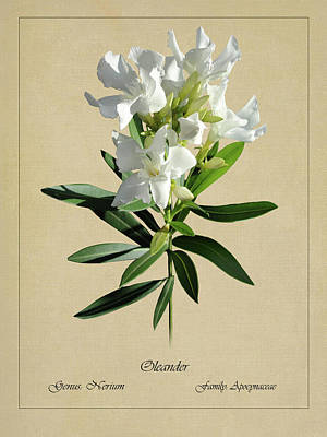 Digital Art - Oleander Botanical by IM Spadecaller