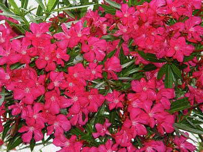 Mixed Media - Oleander - Hot Pink In Houston by Robert J Sadler