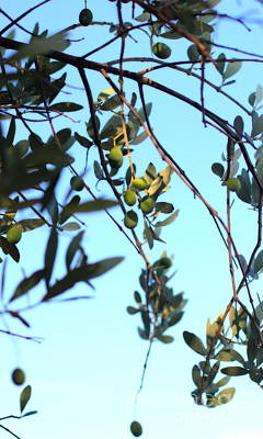 Photograph - Olives Hanging On Tree by Angela Rath