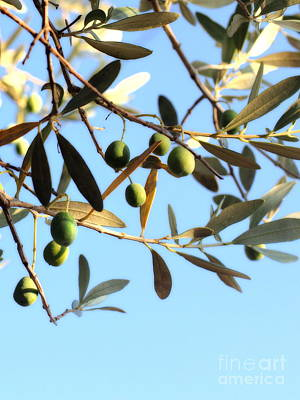Photograph - Olives On The Tree by Angela Rath