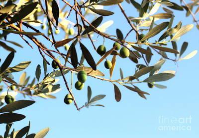 Photograph - Olives And Branch by Angela Rath