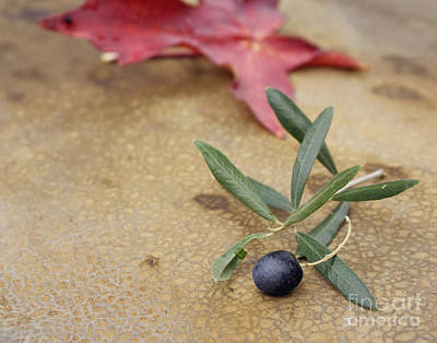 Photograph - Olive by Cindy Garber Iverson
