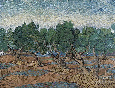 Painting - Olive Grove, 1889 by Vincent Van Gogh
