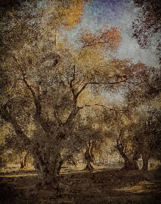 Photograph - Corfu, Greece - Olive Grove I by Mark Forte