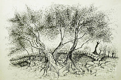 Drawing - Olive Grove by Jasna Dragun