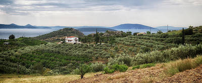 Photograph - Olive Grove Panorama by Shirley Mitchell