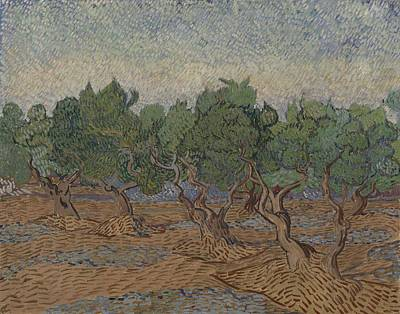 Painting - Olive Grove Saint Remy De Provence  November - December 1889 Vincent Van Gogh 1853  1890 by Artistic Panda