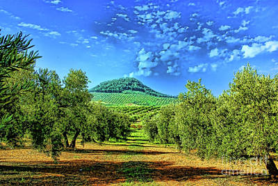 Photograph - Olive Grove Spain by Rick Bragan