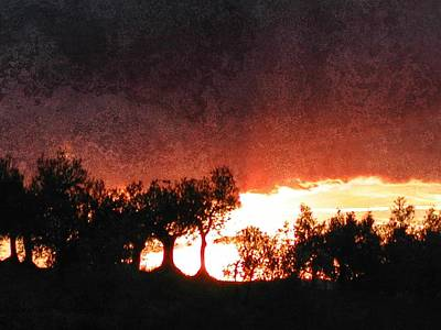 Photograph - Olive Grove Sunset by Dorothy Berry-Lound