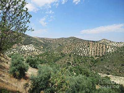 Photograph - Olive Groves Near Iznajar by Chani Demuijlder
