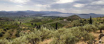 Photograph - Olive Groves Panorama by Shirley Mitchell
