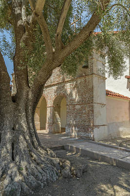 Photograph - Olive Tree And Mission by Alexander Kunz