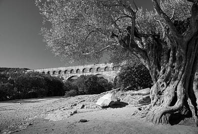 Olive Tree And Pont Du Gard, France Art Print