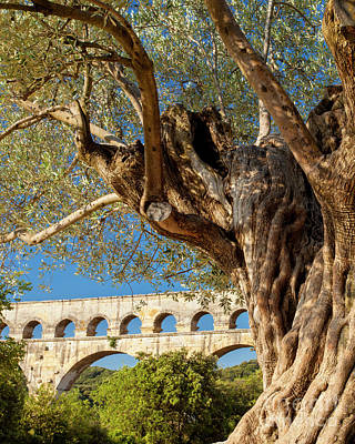 Photograph - Olive Tree At Pont Du Gard by Brian Jannsen