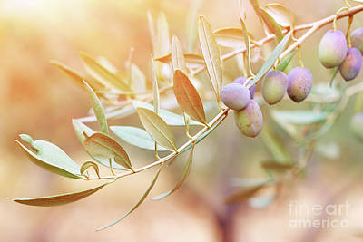 Photograph - Olive Tree Branch by Anna Om