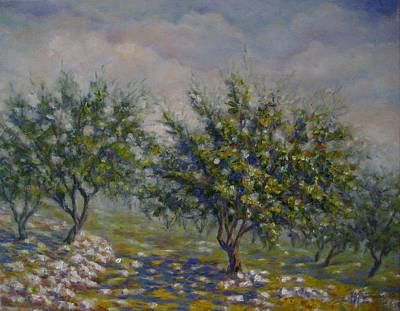 Painting - Olive Tree Field by Mirjana Gotovac