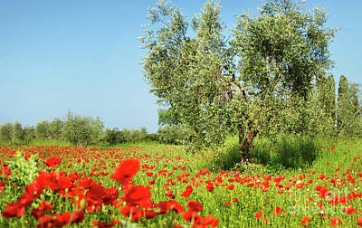 Photograph - Olive Tree In A Poppy Field by IPics Photography