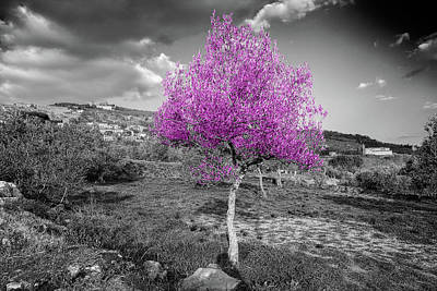 Photograph - Olive Tree In Magenta by Al Hurley